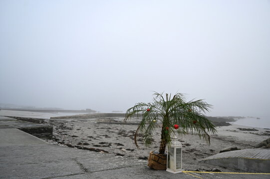 A palm tree with Christmas decorations is seen on Salthill beach during heavy fog in Galway