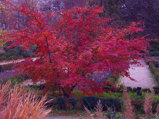 Fototapeta rośliny park kolory natura jesień obraz