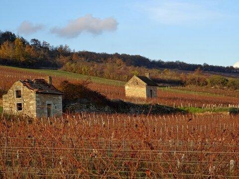 Cabanes dans un vignoble Bourguignon.