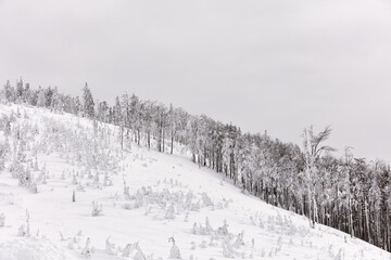 Snow-covered forest in the mountains on a cloudy day, Beskidy Mountains, Poland