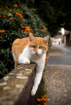 Cat lies on a garden fence and looks at the camera.