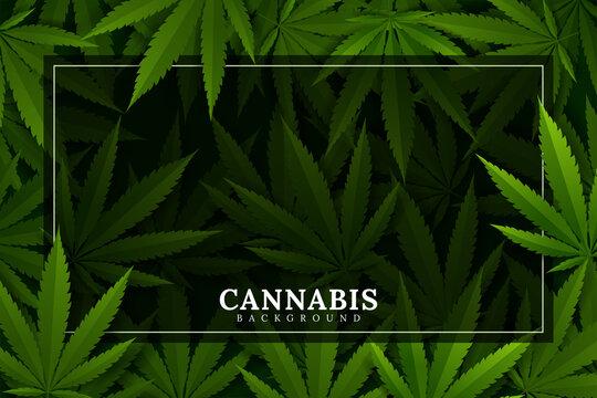 green cannabis leaf drug marijuana herb Background