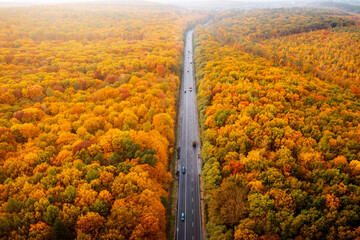 Wall Mural - Splendid view of road passing through autumn forest. Drone flying over the highway.