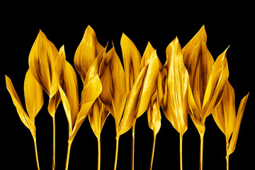 Golden leaves black background isolated closeup, gold flower branch, shiny yellow metal leaf, foliage, floral design element, petals, plant twig, tree sprig, sprout, decorative border, natural pattern Wall mural