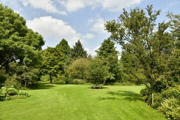 Fototapeta Variété incroyable de plantes et d'arbres à l'arboretum de Kalmthout au nord d'Anvers