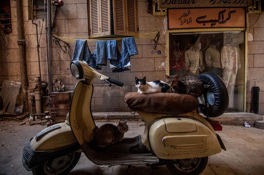 CAIRO, EGYPT - Feb 16, 2009: Cats sitting on a motorcycle in a Cairo alleyway near khan el Khalili Bazaar, Egypt.