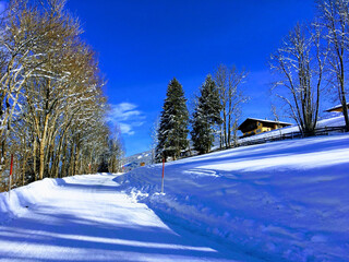 Beautiful scenery of a hill covered in snow with fir and trees. Snowy background picture with houses