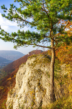 Coniferous tree in front of an autumnal mountainscape on the Swabian Jura at the Alb escarpment near Lichtenstein, Baden-Württemberg, Germany.
