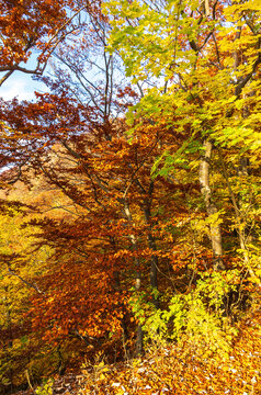 Colorful foliage of trees and bushes spreads autumn mood.