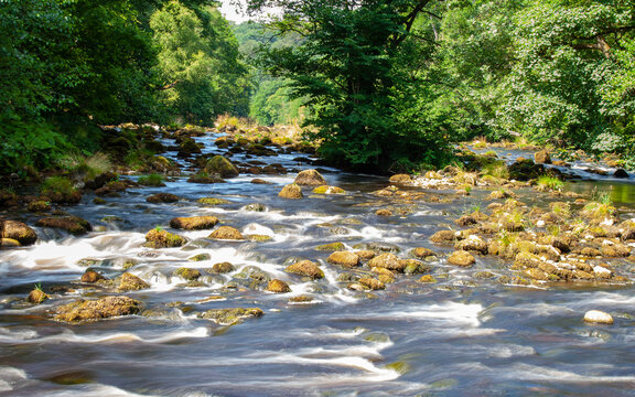 River in forest at Summer. Yorkshire, Great Britain.