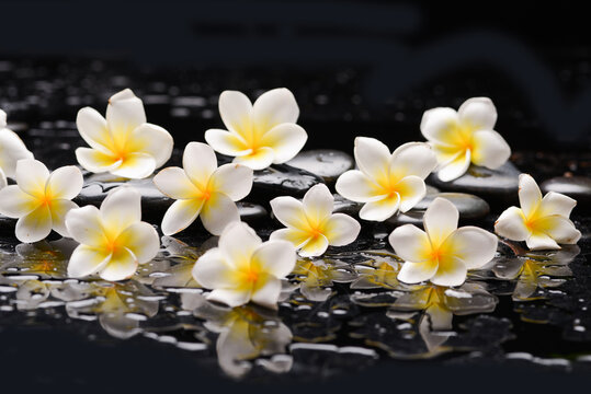 spa still life of with  white frangipani and zen black stones ,wet background