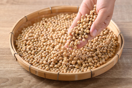 Soybeans seed holding by hand and pouring on bamboo tray