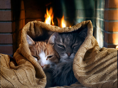 Cats under a blanket by the fireplace