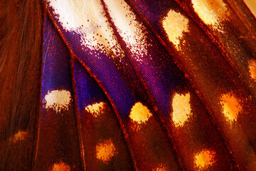 A macro photo, a background of a purple and yellow wing of a butterfly