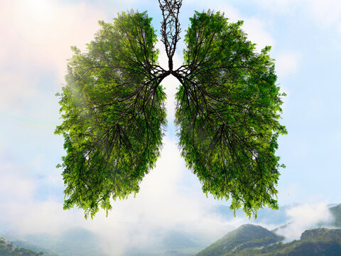 The silhouette of the lungs against the background of a mountain landscape. Trees are the lungs of the planet. Air purification. Mountains. Ecological concept.