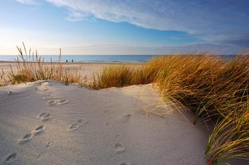 Wybrzeże Morza Bałtyckiego,wydmy, trawa, ,biały piasek. - fototapety na wymiar