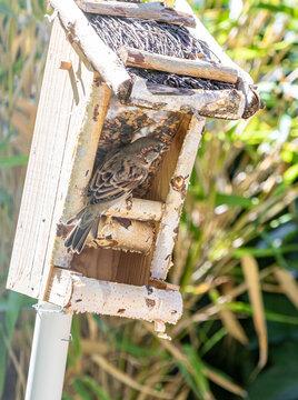 Spatz im Vogelhaus Rücken