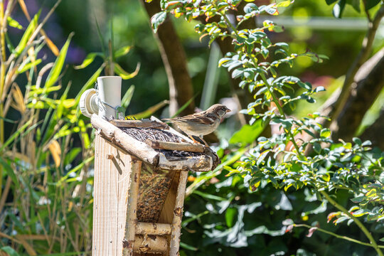 Spatz auf Vogelhaus weggedreht