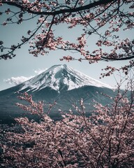 mountain and cherry blossoms