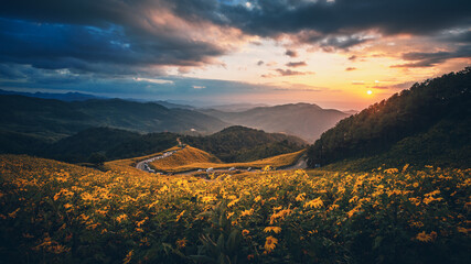 Panorama landscape of Tung Bua Tong forest park at sunrise in Mae Hong Son Thailand