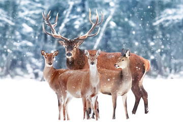 Group of  noble deer against the background of a beautiful winter snow forest. Artistic winter landscape. Christmas image.