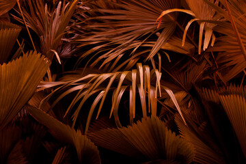Wall Mural - closeup nature view of palm leaf  background, dark tone concept