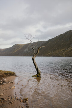 Tree on the shore of loch