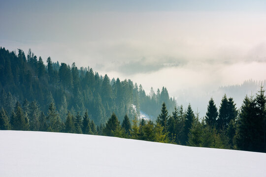 approaching blizzard in mountain landscape. spruce trees on snow covered meadow. bad weather condition in winter. fog and clouds in the distant valley