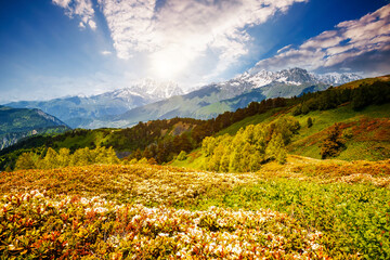 Wall Mural - Attractive view of the alpine landscape at the foot of Mt. Ushba. Location place Upper Svaneti region, Georgia, Europe.