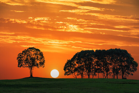 The small forest landscape in the sunset