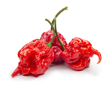 Carolina Reaper, the hottest chile pepper Capsicum chinense, whole ripe pod, isolated on white background. Superhot or extremely hot chile pepper