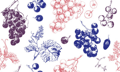 Fototapeta Seamless pattern with grape drawings, hand drawn illustration of fresh grape vines