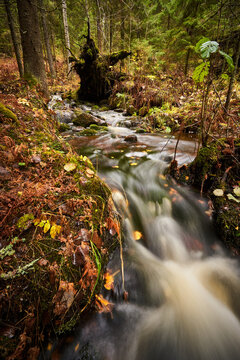 small creek in autumn forest