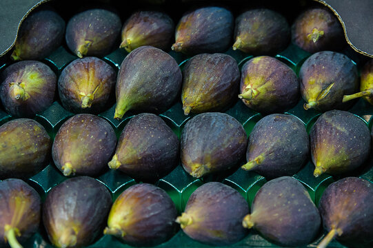 Black Mission figs or Franciscana figs, high quality variety of the common fig or Ficus carica in a plastic tray at the supermarket or grocery store, Mediterranean fruit with multiple health benefits