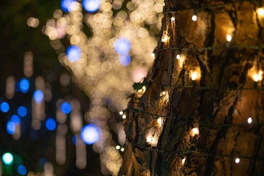 Holiday Christmas Lights on Tree Outdoors