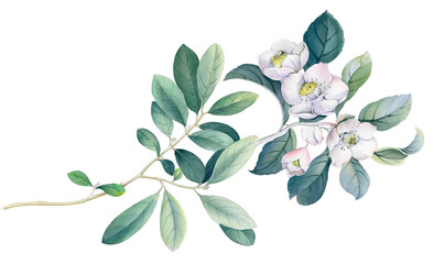 Flowers watercolor illustration. Manual composition.Design for cover, fabric, textile, wrapping paper . Wall mural