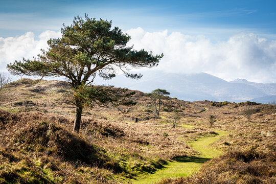 pathway to the Mournes Northern Ireland