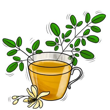 natural herbal moringa tea