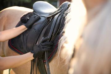 Fototapeta Young woman putting saddle on horse outdoors, closeup. Beautiful pet