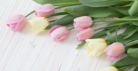 pink and yellow tulips on white wooden background