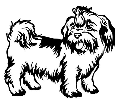 decorative standing portrait dog shih tzu kids coloring page line art illustration vector