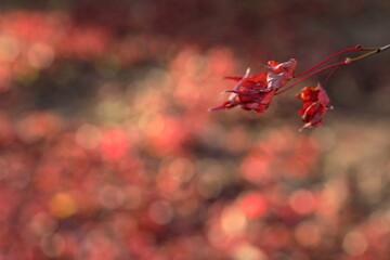 日本の秋の紅葉ももう終わり、枯葉が多くなりました。