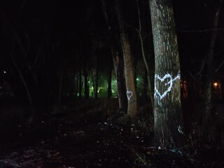 forest in the night