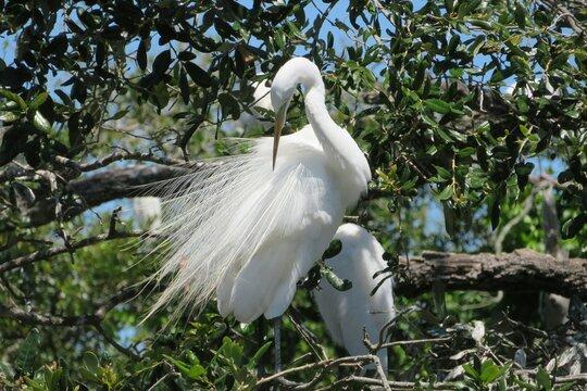 Beautiful white heron on tree
