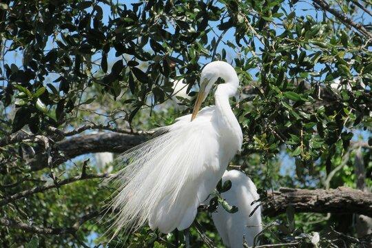 Beautiful white egret on blue sky background