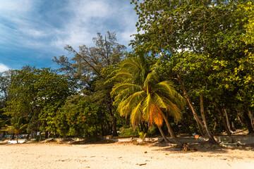 Tropikalny krajobraz ujęcie plaży z palmami i oceanem.