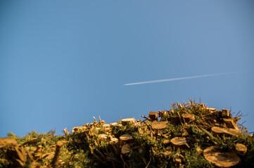 Obraz Smuga na niebie po przelatującym samolocie z perspektywy patrzącego spod ściętej sterty drzew - fototapety do salonu