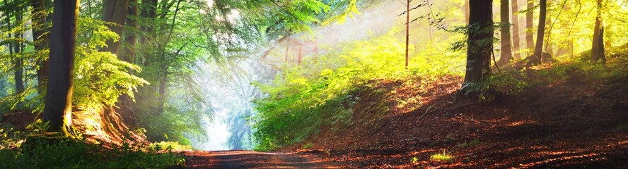 Pathway in a majestic green deciduous forest in a morning fog. Ancient tree silhouettes close-up. Atmospheric dreamlike summer landscape. Sun rays, soft light. Pure nature, ecology, fantasy, fairytale