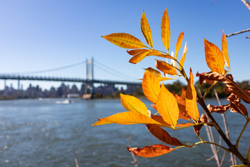 Colorful Autumn Leaves along the East River in front of the Triborough Bridge in Astoria Queens of New York City Fotobehang