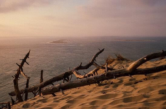 Dune du Pilat, Réserve du Banc d'Arguin, Bassin d'Arcachon, Landes de Gascogne, 33, Gironde